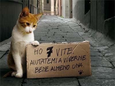 gatto-abbandono.jpg